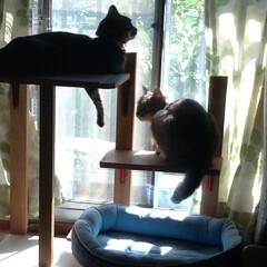 猫/甘えん坊/猫との暮らし/ニャンコ同好会 マルが 里親さんにの所に行ってから テン…(3枚目)