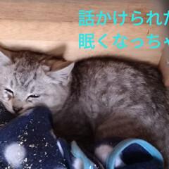 簡易ケージ/にゃんこ同好会/子猫/野良猫/サバトラ/保護猫 今日の 保護猫ちゃん😸 ちょい噛みそうに…(2枚目)
