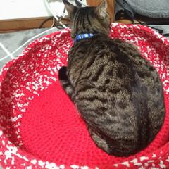 キジトラ/保護猫/ズパゲッティ/ハンドメイド/メルカリ/安い/... 夕方、メルカリで気になっていた スパゲッ…(3枚目)