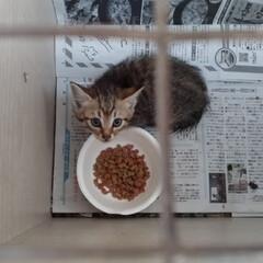 落ちた/野良猫/子猫/近所/避妊手術/保護猫/... あれから 子猫を捕まえようと マスにパイ…