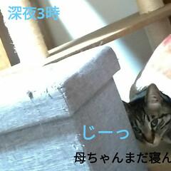 寝起き/キジトラ/眩しい/猫との暮らし/ニャンコ同好会/朝/... 昨夜 3時頃まで腰を冷やしたりしながらテ…(3枚目)