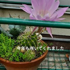 お願い/悲しい/地元サイト/子猫/野良猫/いたずら/... 昨日、放置サボちゃんの花が咲いてました✨…(2枚目)
