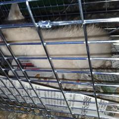 落ちた/野良猫/子猫/近所/避妊手術/保護猫/... あれから 子猫を捕まえようと マスにパイ…(2枚目)