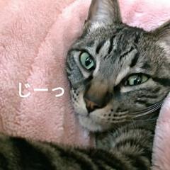 寝起き/キジトラ/眩しい/猫との暮らし/ニャンコ同好会/朝/... 昨夜 3時頃まで腰を冷やしたりしながらテ…(7枚目)