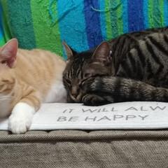 練習/ビビり猫/慣らし/餌やり/猫/ニャンコ同好会/... 保護猫まるちゃん もうデカい😅  人が立…