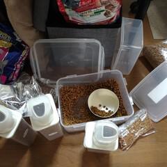 配給/キャラット/キャネット/ビューティープロ/餌準備/猫家族/... は~い 猫衆の皆さ~ん😺 配給準備で~す…