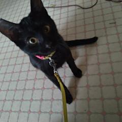 ありがとう/ねこみみ/猫ボランティア/里親募集/里親さん/野良猫/... 雨で さむ~い  先日 近所の猫事情で色…