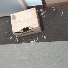 スッキリ/サバトラ/ニャンコ同好会/開封/箱/Amazon/... 配達されたAmazonの箱を 開封してな…