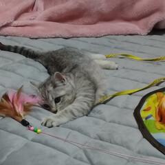 茶トラ白/サバトラ毛長/キジトラ/捕獲猫/保護猫/猫ケージ/... サクラ💮 マル。 テン、  遊んで 食べ…