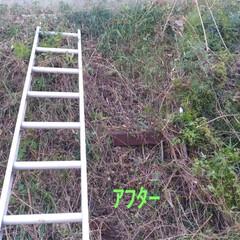 草切り/ハシゴ/マット?/ズバゲッティ/カゴ/編み物/... 昨日の事だけど、 急斜面の草 やる気はな…(2枚目)