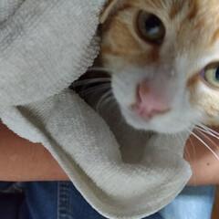 保護猫/病院代/耳ダニ/ダイソー/100均/DIY/... 保護猫ちゃん🐱 多少威嚇するものの抱いた…(1枚目)