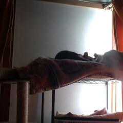 多頭飼い/猫/保護猫/馴れていく/にゃんこ同好会/猫のいる暮らし 今朝の1コマ  昨夜は、モモだけケージで…