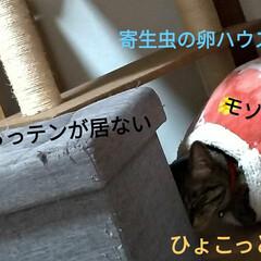 寝起き/キジトラ/眩しい/猫との暮らし/ニャンコ同好会/朝/... 昨夜 3時頃まで腰を冷やしたりしながらテ…(1枚目)