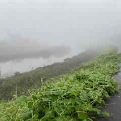 無印良品 霧の朝 朝ドアを開けると、どこかにタイム…
