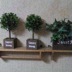 緑/観葉植物/ホルダ/最近買った100均グッズ 本物だと枯らせてしまう(;'∀')ので、…
