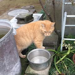 猫/野良猫 2日ぶりのお外で野良の顔に戻る(・_・;