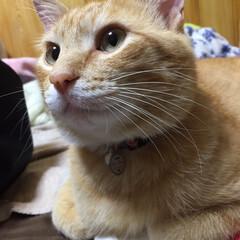 猫 どアップでどうぞ❣️ 今日はカミナリが鳴…(1枚目)