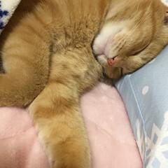 猫 久しぶりの投稿です😅 寒くなってきました…(4枚目)