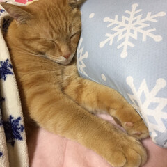 猫 久しぶりの投稿です😅 寒くなってきました…(3枚目)