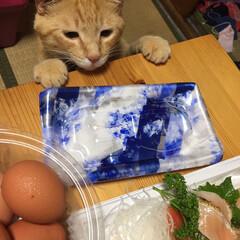 猫 「お刺身美味しそうだにゃー😋」こんな顔で…(1枚目)
