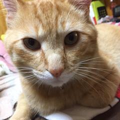 猫 どアップでどうぞ❣️ 今日はカミナリが鳴…(2枚目)