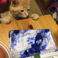 猫 「お刺身美味しそうだにゃー😋」こんな顔で…(2枚目)