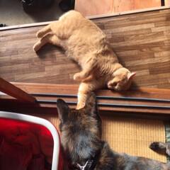 犬猫 ワンコ初登場❣️