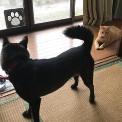 犬 エマちゃん昨日で2歳になりました❣️元気…(5枚目)