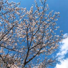 嫌がる帽子/1歳5ヵ月/桜🌸 おはようございます(*´ー`*)皆さんお…(3枚目)