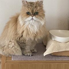 猫 ご飯入ってないよ、の訴え。
