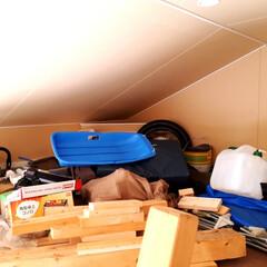 収納棚/ガレージdiy/DIY/収納/掃除/暮らし コロナで出歩けない休日を利用し ガレージ…
