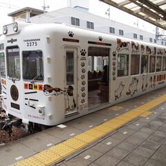 電車/貴志川線 今日は久しぶりに和歌山貴志川線 たまちゃ…