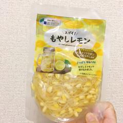 PR/サラダコスモ/もやしレモン もやしレモンが届きました。 2袋ついてき…(1枚目)