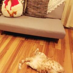 ねこ/猫のいる暮らし ゴロン♪寝正月も終わりにゃっ🐈 りんちゃ…