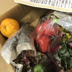 食事情 ふるさと納税で頼んでいた野菜セットが届き…