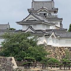 紫陽花/お城