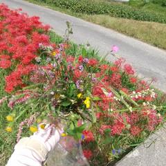 おさんぽ/花 おさんぽしながら野の花を摘んでいったら、…