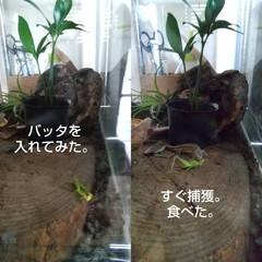 季節インテリア/暮らし カナヘビちゃんが可愛くて♥️ とりあえず…