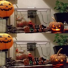 手作り/ジャックオーランタン/ハロウィン/100均deハロウィン/Seria/DAISO 子供達が作ったジャック・オー・ランタンを…