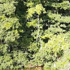 夕方/初めて入る山道/👀📷✨/近くの小高い山/大きな池/白鷺❔1羽/...  おはようございます☺  10月24日(…(1枚目)