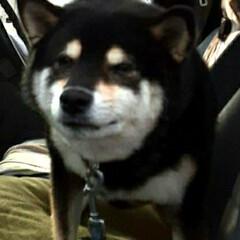 👀📷✨/今月で6歳/武蔵くん/柴犬/犬 初めてわんちゃんを👀📷✨しました❗  🌟…