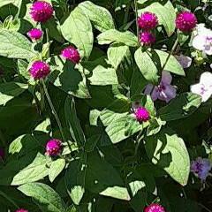 買い物帰り/👀📷✨/季節の花/花 おはようございます☺  8月26日(水)…