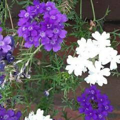 季節の花/花 おはようございます☺  9月7日(月) …