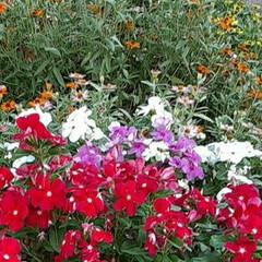近所の畑で/👀📷✨/季節の花/花 おはようございます☺  9月13日(日)…