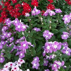 ご近所/季節の花/花 近所で👀📷✨しました🎵  もりもりに咲い…