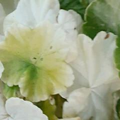 買い物に行く途中/👀📷✨/季節の花/花 おはようございます☺  9月19日(土)…