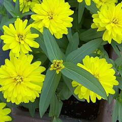 季節の花/花 近所で👀📷✨しました🎵
