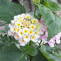 小さな花の集まり!/昨日/買い物帰りに/👀📷✨ おはようございます🙋♀️❗ 9月11日…(2枚目)