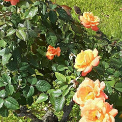 薔薇公園/先日/👀📷✨ おはようございます☺  11月1日(日)…