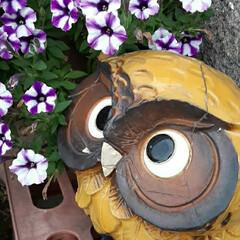 ふくろう/可愛いグッズ/👀📷✨/買い物に行く途中/ガーデニング/花 花が少ない事もあり、  ついつい、花以外…